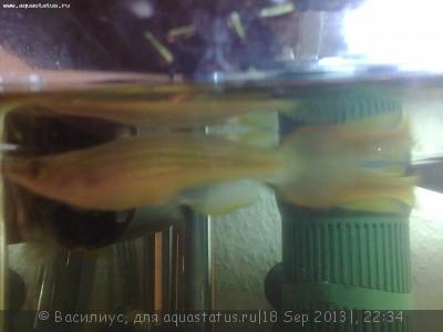 Помогите опознать рыбку опознание рыб  - photo0063.jpg