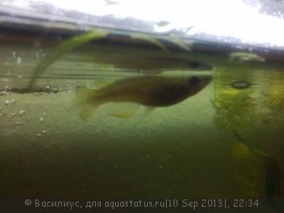 Помогите опознать рыбку опознание рыб  - photo0064.jpg