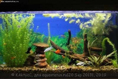 Фото аквариумов объемом от 101 до 250 литров - IMG_2829.JPG