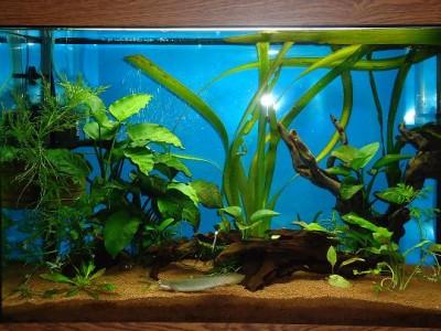Фото аквариумов объемом от 101 до 250 литров - DSC03452.JPG