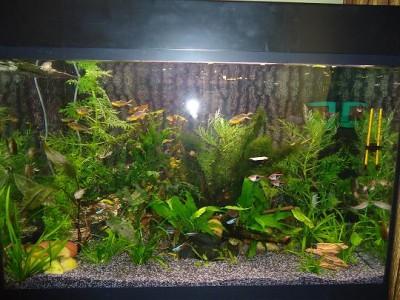 Фото аквариумов объемом от 101 до 250 литров - DSC03413.JPG
