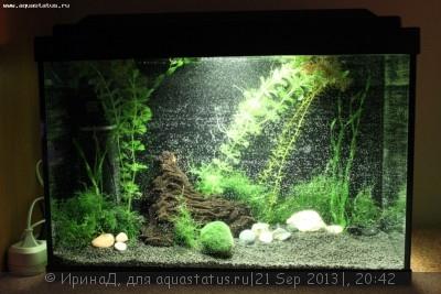 вот мой аквариум 3 дня назад. первое фото - IMG_6108.JPG