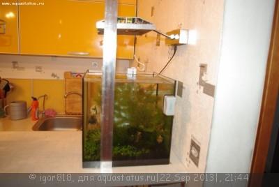 Светодиодное освещение аквариума - IMGP4601.JPG