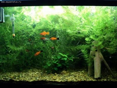 Фото аквариумов объемом от 31 до 100 литров - 12656.jpg