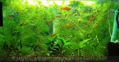 Фото аквариумов объемом от 31 до 100 литров - 0_9ada4_262ad6b2_XL.jpg