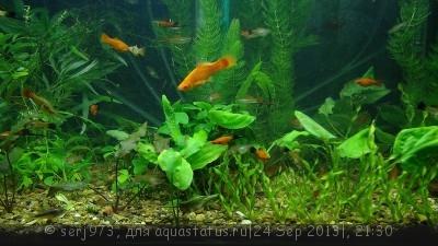 Фото аквариумов объемом от 31 до 100 литров - 0_a29bf_8c036a04_XL.jpg.jpg