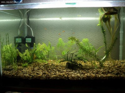 Фото аквариумов объемом от 101 до 250 литров - 4.jpg