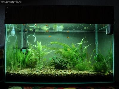 Фото аквариумов объемом от 101 до 250 литров - 6.jpg