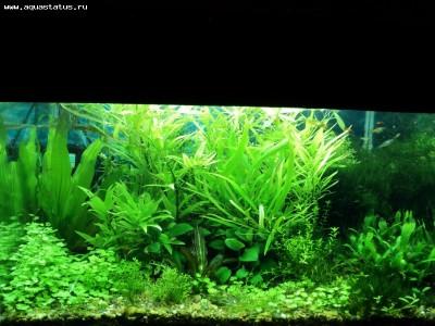 Фото аквариумов объемом от 101 до 250 литров - 10.jpg
