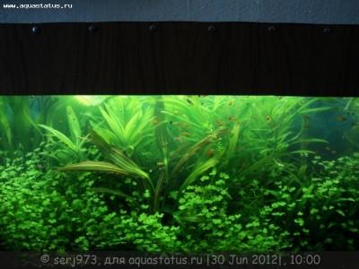 Фото аквариумов объемом от 101 до 250 литров - 12.jpg
