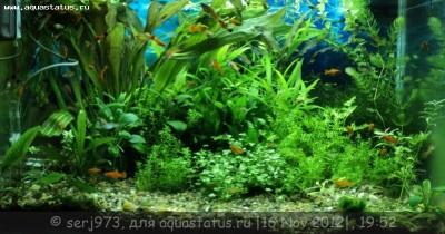 Фото аквариумов объемом от 101 до 250 литров - 14.jpg