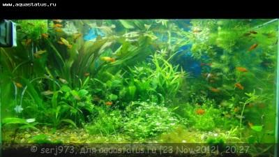Фото аквариумов объемом от 101 до 250 литров - 15.jpg