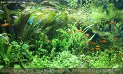 Фото аквариумов объемом от 101 до 250 литров - 16.jpg