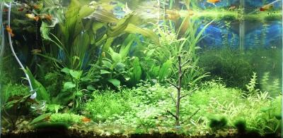 Фото аквариумов объемом от 101 до 250 литров - 18.jpg