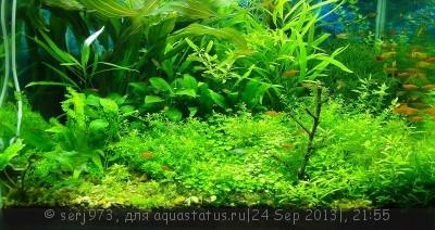 Фото аквариумов объемом от 101 до 250 литров - 19.jpg