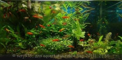 Фото аквариумов объемом от 101 до 250 литров - 22.jpg