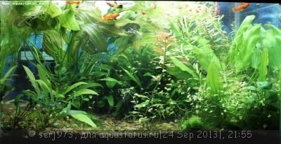 Фото аквариумов объемом от 101 до 250 литров - 23.jpg
