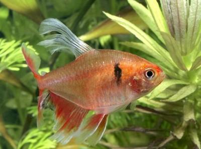 Помогите опознать рыбку опознание рыб  - мин  ву.jpeg