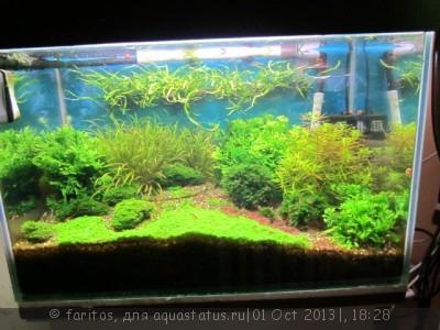 Фото аквариумов объемом от 31 до 100 литров - огород 3.jpg