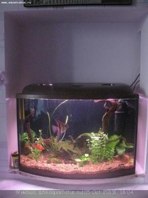 Фото аквариумов объемом от 31 до 100 литров - IMG_3186.jpg