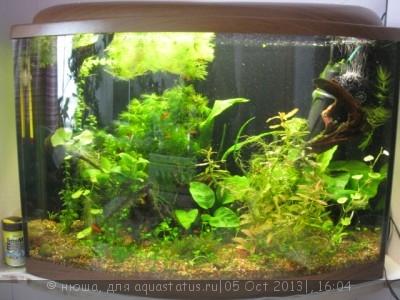 Фото аквариумов объемом от 31 до 100 литров - IMG_4089.jpg