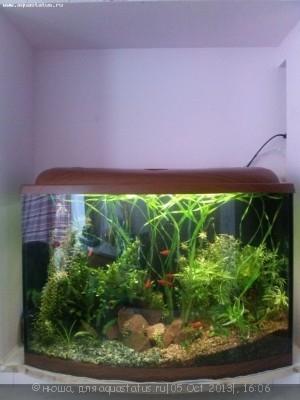 Фото аквариумов объемом от 31 до 100 литров - CAM00171.jpg