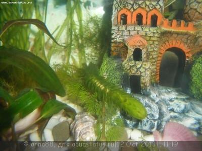 Опознание аквариумных растений - DSCN0638.JPG