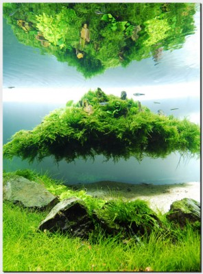 Акваскейп месяца: август 2010: Beyond the Nature  - 1_plantedtank_islandreflection.jpg