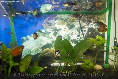 Фото аквариумов объемом от 31 до 100 литров - 1227.jpg