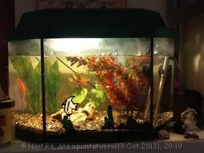 Фото аквариумов объемом от 31 до 100 литров - image.jpg