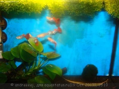 Помогите опознать рыбку опознание рыб  - DSC03239.JPG