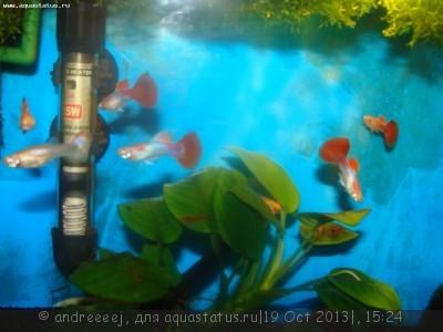 Помогите опознать рыбку опознание рыб  - DSC03255.JPG