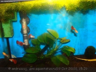 Помогите опознать рыбку опознание рыб  - DSC03249.JPG