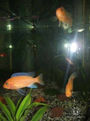 Помогите опознать рыбку опознание рыб  - getImageCATJGLYS.jpg
