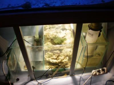 Планирование морского аквариума - PA180135.JPG