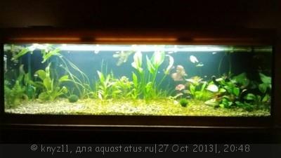 Фото аквариумов объемом свыше 401 литра - WP_20131027_003.jpg
