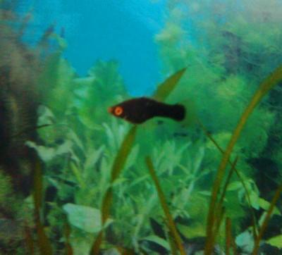 Помогите опознать рыбку опознание рыб  - Слов024.jpg