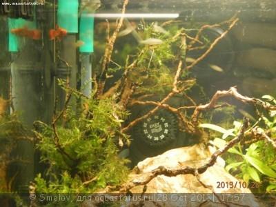 Мой аквариум - кубик акваэль 20 литров Smelov  - PA280379.JPG