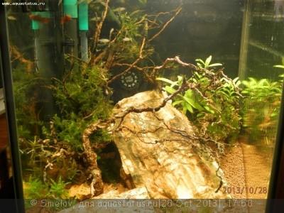 Мой аквариум - кубик акваэль 20 литров Smelov  - PA280381.JPG