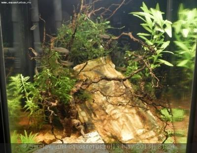Мой аквариум - кубик акваэль 20 литров Smelov  - PB130426.JPG