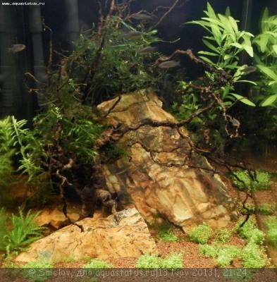 Мой аквариум - кубик акваэль 20 литров Smelov  - PB130429.JPG