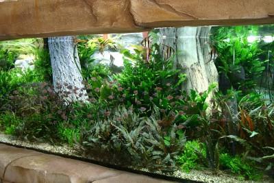 Интересные аквариумы со всего мира - 6.JPG