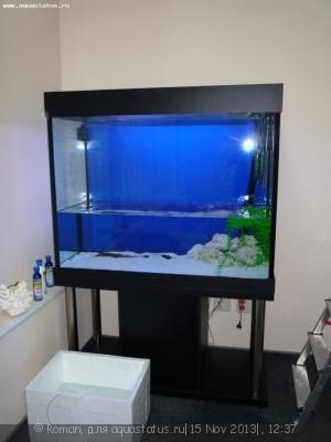 Переезд или перевозка или перенос аквариума - P1080376.JPG