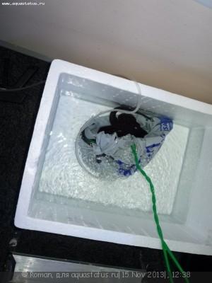 Переезд или перевозка или перенос аквариума - P1080382.JPG