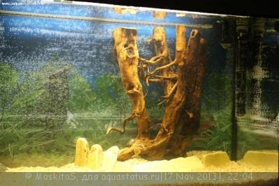 Коряга в аквариуме - IMG_4989.JPG
