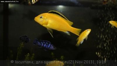 Аквариумные рыбки - долгожители - _DSC7740.JPG
