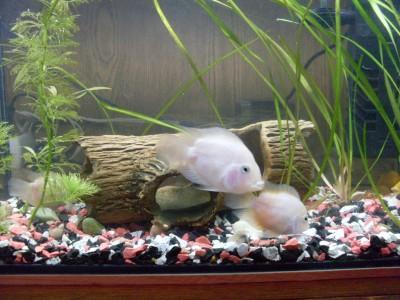 Помогите определить рыбу - SDC13757.JPG