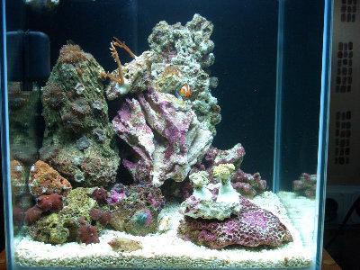 Морской мини аквариум 30 литров Roman  - CIMG0711.JPG