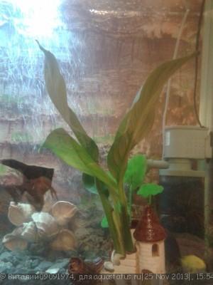 Опознание аквариумных растений - Фото-0064.jpg