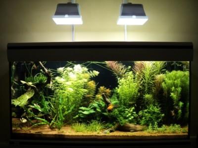 Мои аквариумы Алексей7  - DSC00343.JPG